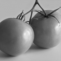 2nd Monochrome – RipeTomatoes by Jim Harrison