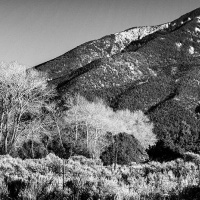 2nd mono – Cottonwoods by Darryl Neill