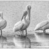 1st Mono – Symmetry in White by Darrly Neill