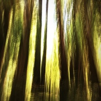 Digital 2nd - Muir Woods ICM By Brad Bartee