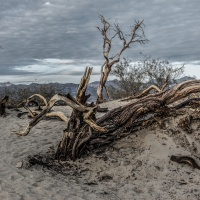 Color 1st – Barren by Rohit Kamboj