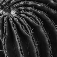 Mono 1st – Cactus by Chris Handley