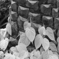 Mono HM – Tree Bark and Viny Leaves by Brandon Ward