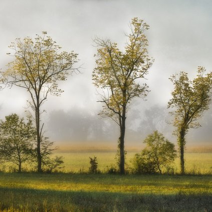 Clearing Mist - Cades Cove by Stan Greenberg