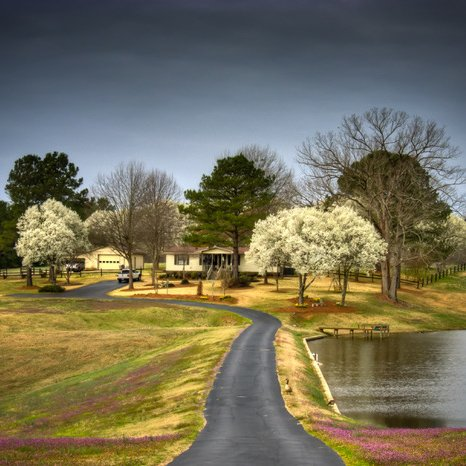Pear Trees in Bloom - South Carolina by Stan Greenberg