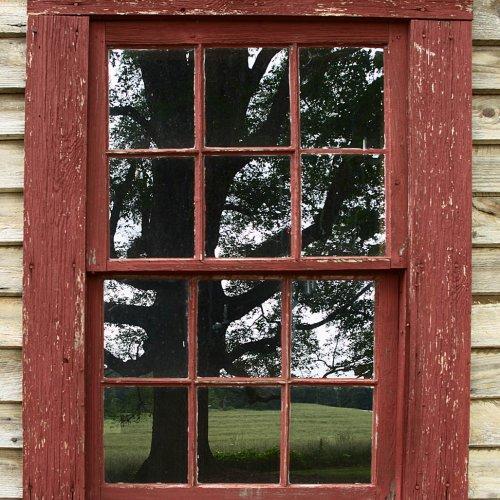 Oak Reflections by Jim Harrison