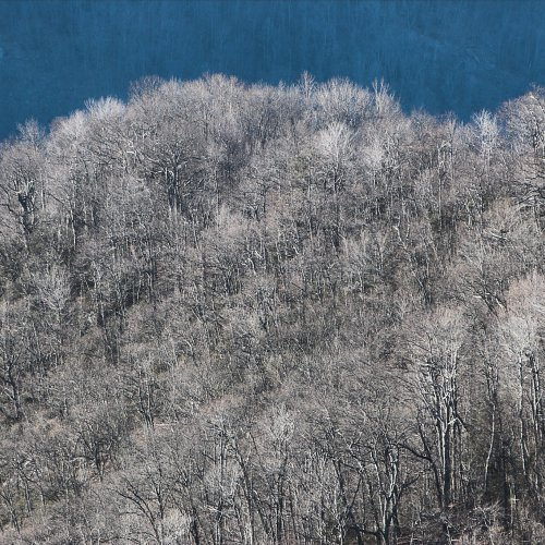 Winter Forest - Sun and Shadow by Jim Harrison