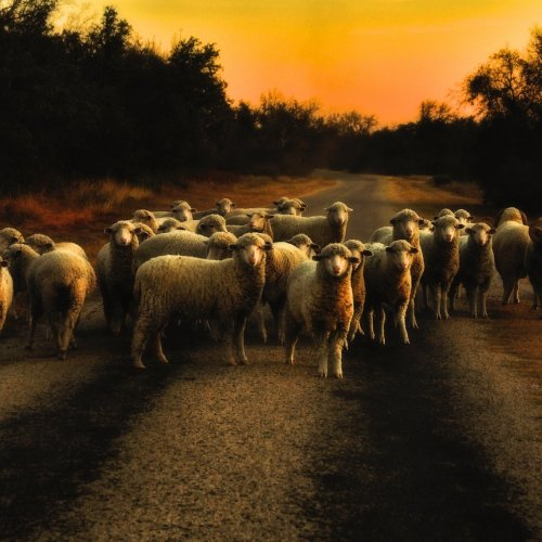 Color Member's Choice: On A Country Road in Texas by Jennifer Cardinell