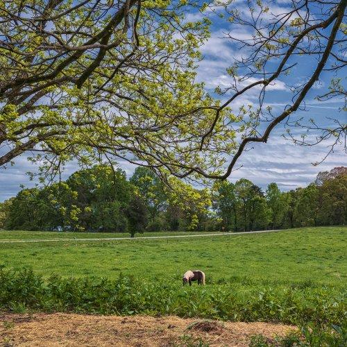 Shields-Ethridge Field by Darryl Neill