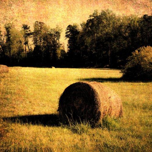 Sylvan Summer by Al McLeod