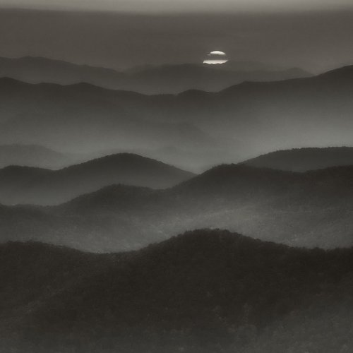 Shares of Carolina by Darryl Neill