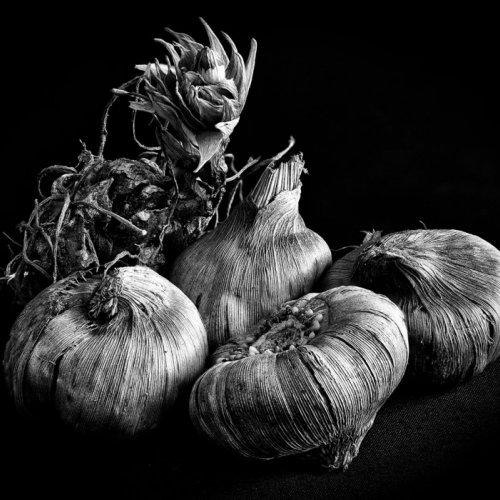 Gladiolus Bulbs by Darryl Neill