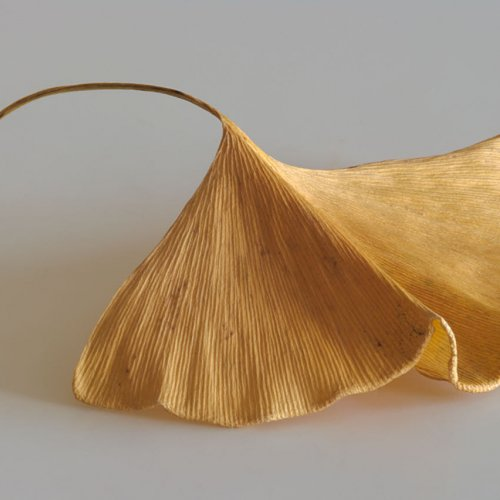 Ginko Leaf - Fall by Jim Harrison