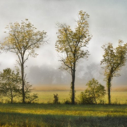 Clearing Mist by Stan Greenberg