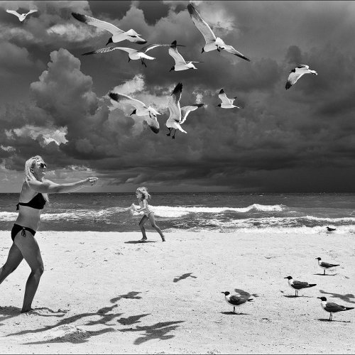 Mono HM - Sea Gull Heaven by Marc McElhaney