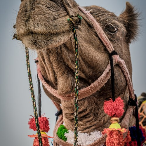 How do I Look? by Rohit Kamboj