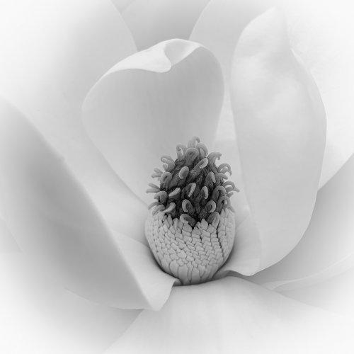 Magnolia by Janerio Morgan