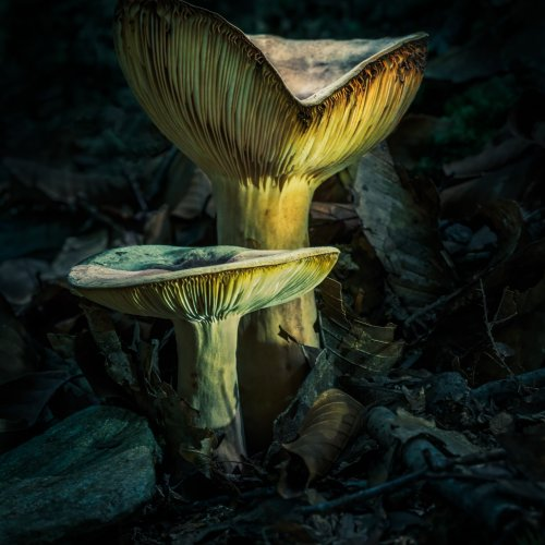 Twilight on the Forest Floor by Janerio Morgan