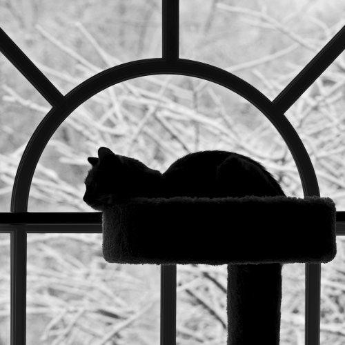 Mono Members_Choice-Happy Kitty by Jenn Cardinell
