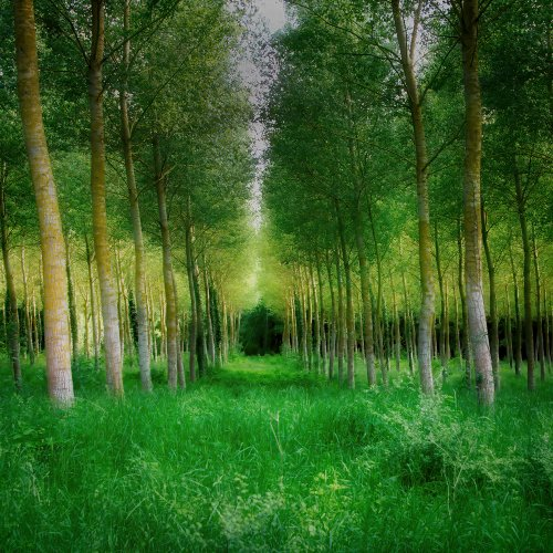 Color HM-The Loire Valley by Michael Amos