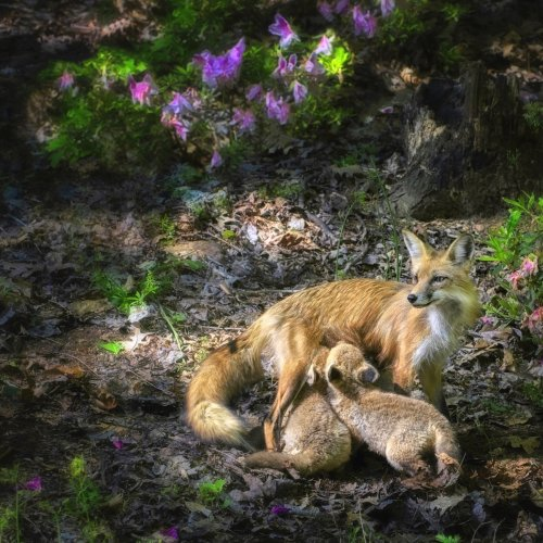 Color 1st-Always Watching by Jenn Cardinelly