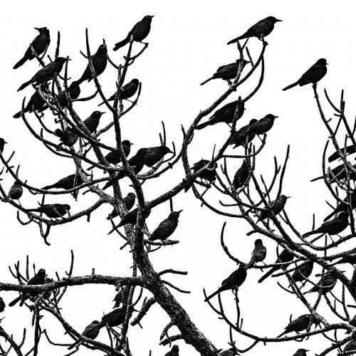 Mono HM-Migration by Darryl Neill