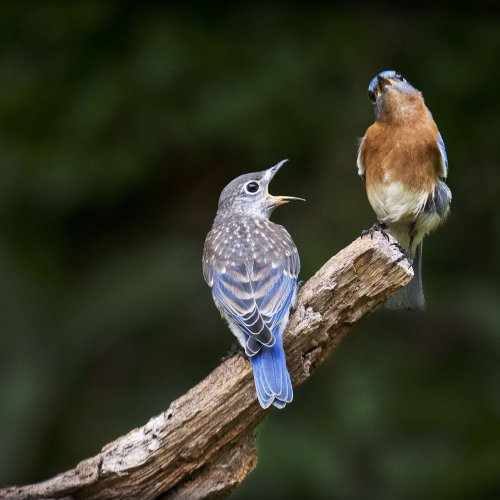 Color 1st and Members Choice - Dad, You_re Not Listening To Me by Marc McElhaney