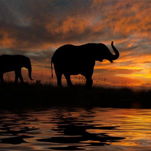 Digital 1st - Elephant Walk by Stan Greenberg