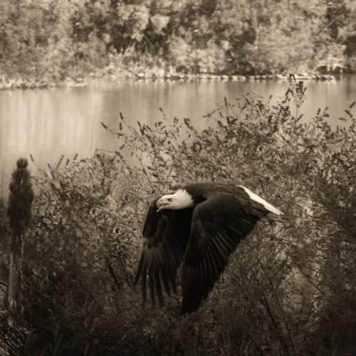 Mono 1st - Fly By by Jenn Cardinell