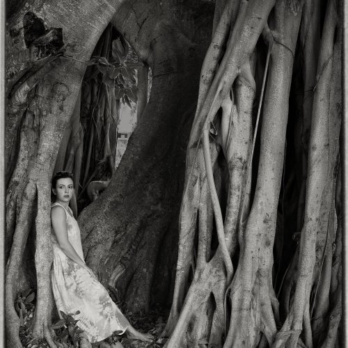 Mono 3rd - Lena In The Tree by Marc McElhaney