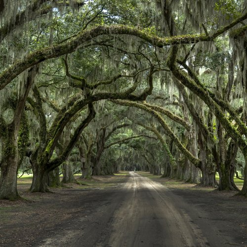 Color Members Choice-Lowcountry Afternoon by Michael Amos