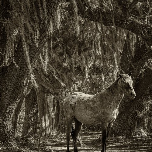 Mono 2nd_Spanish Moss with Horse (composite) by Chris Handley